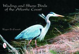 Wading and Shore Birds of the Atlantic Coast