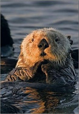 Sea Otter Sierra Club Pocket Journal