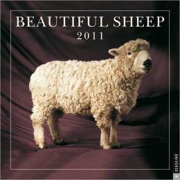 2011 Beautiful Sheep Wall Calendar