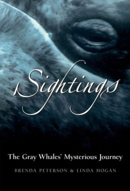 Sightings: The Gray Whale's Mysterious Journey