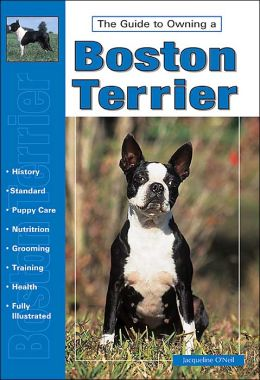 Guide to Owning a Boston Terrier