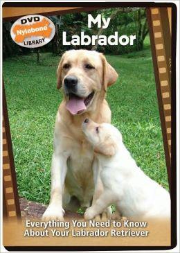 My Labrador