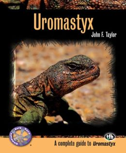 Uromastyx