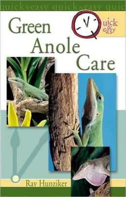 Quick & Easy Green Anole Care