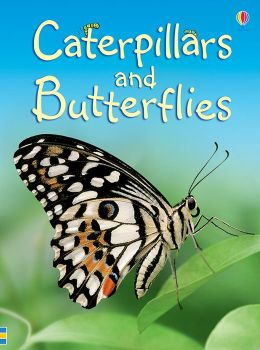 Caterpillars and Butterflies - Internet Referenced (Level 1)