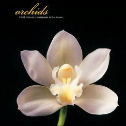 2006 Orchids Wall Calendar