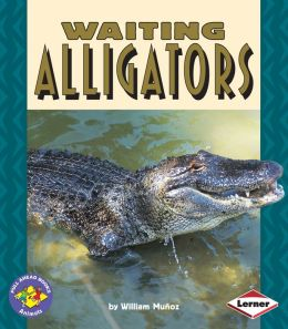 Waiting Alligators