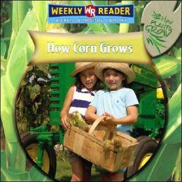 How Corn Grows