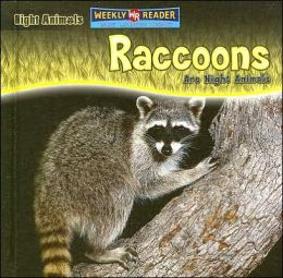 Raccoons Are Night Animals