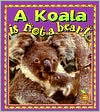 A Koala Is Not a Bear!