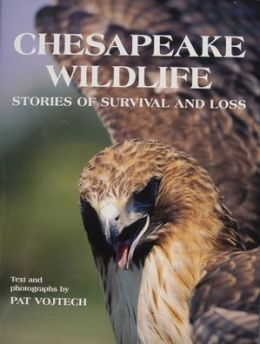 Chesapeake Wildlife: Stories of Survival and Loss