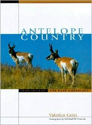 Antelope Country: Pronghorns - The Last Americans