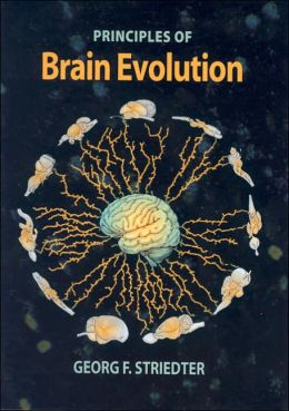 Principles Of Brain Evolution