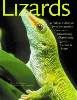 Lizards: A Natural History of Some Unknown Creatures: Extraordinary Chameleons, Iguanas, Geckos, & More