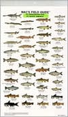 Mac's Field Guide to Freshwater Fish of North America