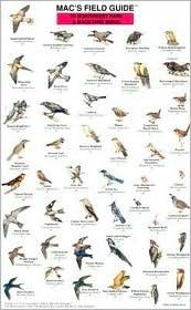 Mac's Field Guide to Northwestern Park and Backyard Birds