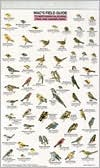 Mac's Field Guide to Northern California Park Backyard Birds