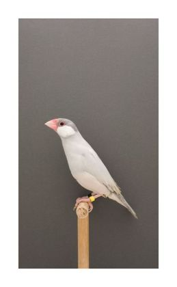 Luke Stephenson : An Incomplete Dictionary of Show Birds