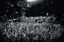 Gregory Crewdson: Fireflies