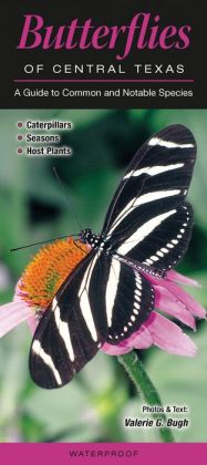 Butterflies of Central Texas: A Guide to Common and Notable Species