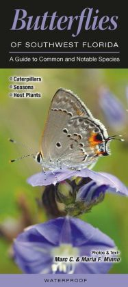 Butterflies of Southwest Florida: A Guide to Common and Notable Species