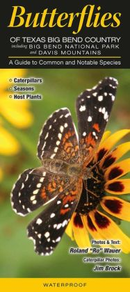 Butterflies of Texas Big Bend Country including Big Bend National Park and Davis Mountains: A Guide to Common and Notable Species