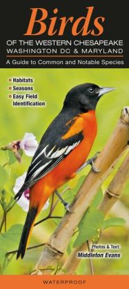 Birds of the Western Chesapeake - Washington DC and Marlyand: A Guide to Common and Notable Species