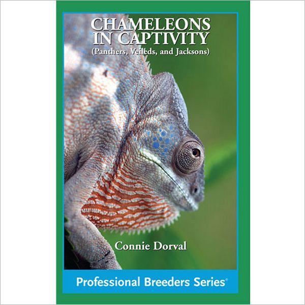 Chameleons in Captivity