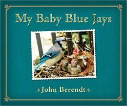 My Baby Blue Jays