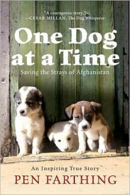 One Dog at a Time: Saving the Strays of Afghanistan