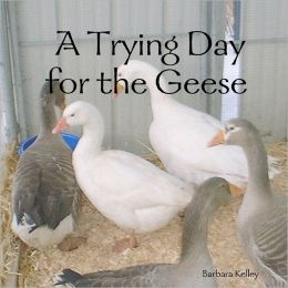 A Trying Day for the Geese
