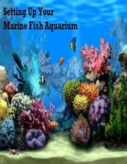 Setting Up Your Marine Fish Aquarium