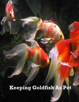 Keeping Goldfish As Pet