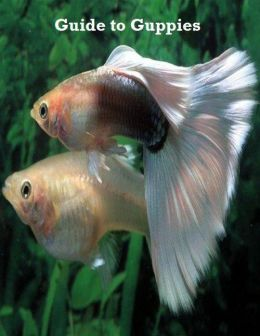 Guide to Guppies