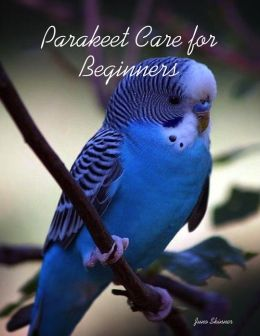 Parakeet Care for Beginners