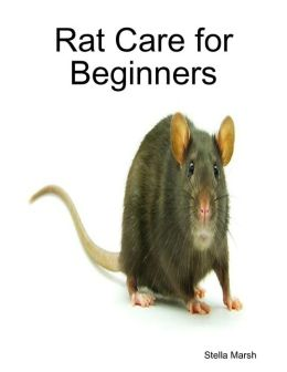 Rat Care for Beginners
