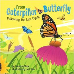 From Caterpillar to Butterfly: Following the Life Cycle