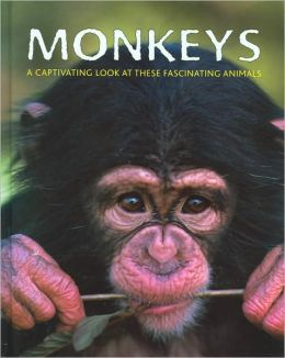 Monkeys: A Captivating Look At These Fascinating Animals