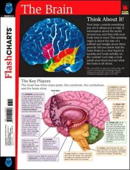 Brain (FlashCharts)