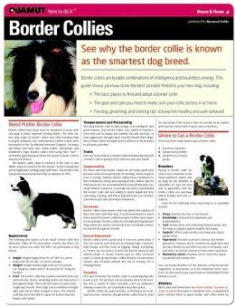 Border Collie (Quamut)