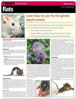 Rats (Quamut)