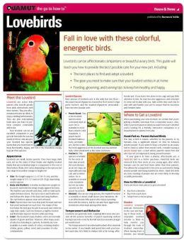 Lovebirds (Quamut)