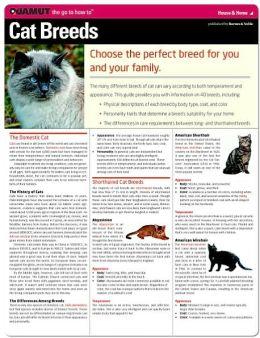 Cat Breeds (Quamut)