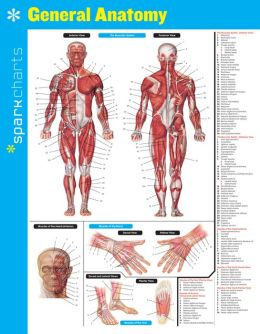 General Anatomy SparkCharts