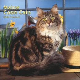2008 Maine Coon Cats Square Wall Calendar