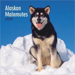 2009 Alaskan Malamutes Wall Calendar