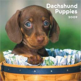 Dachshund Puppies 2009 Mini Calendar