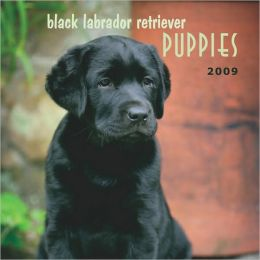 Black Labrador Retrievers Puppies 2009 Calendar