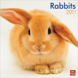 2011 Rabbits Square Wall Calendar