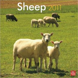 2011 Sheep Square Wall Calendar
